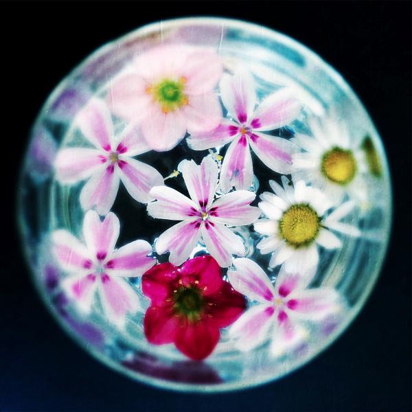 blossoms0